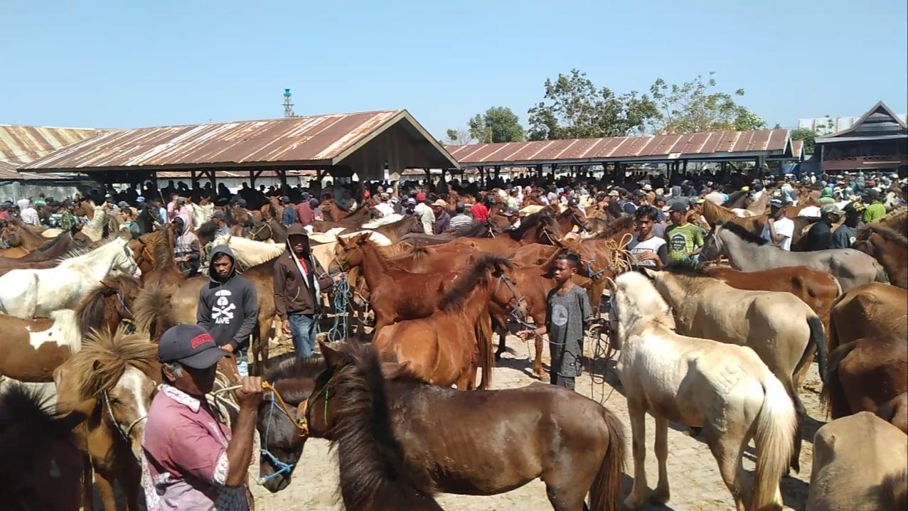 Intip Keunikan Pasar Kuda Di Jeneponto Satu Satunya Di Sulsel Makassar Terkini